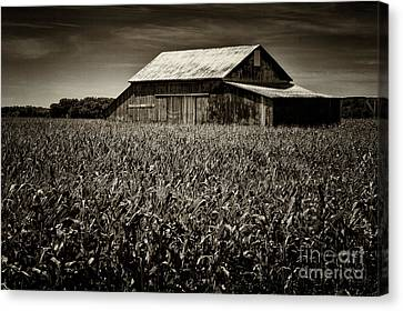 Barn In Cornfield Canvas Print by Todd Bielby