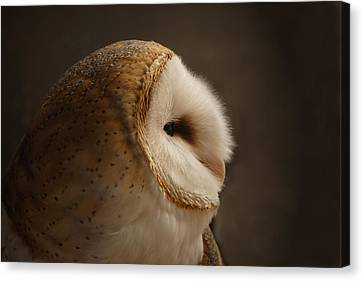 Barn Owl 3 Canvas Print by Ernie Echols