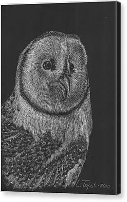 Barn Owl Canvas Print by Lawrence Tripoli