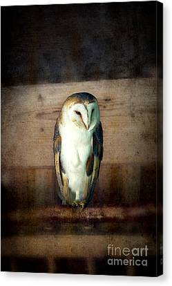 Barn Owl Vintage Canvas Print by Jane Rix