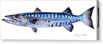 Barracuda Canvas Print by Carey Chen