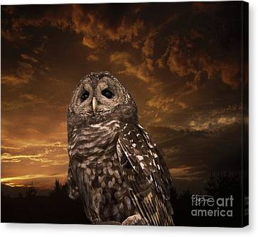 Barred Owl  Canvas Print by Cris Hayes