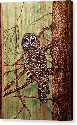 Barred Owl Canvas Print by Danette Smith