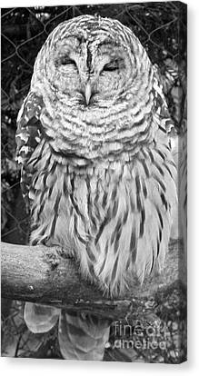 Barred Owl In Black And White Canvas Print by John Telfer