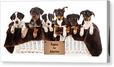 Basket Of Mixed Breed Puppies Canvas Print by Susan  Schmitz