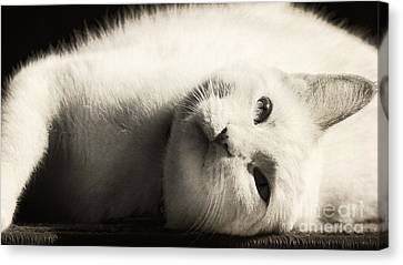Basking In The Sun Canvas Print by Pam  Holdsworth