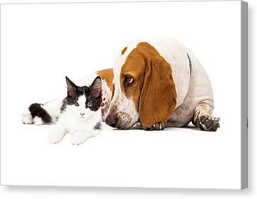 Basset Hound Dog And Kitten Canvas Print by Susan  Schmitz