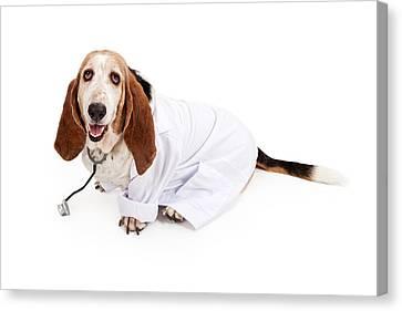 Basset Hound Dressed As A Veterinarian Canvas Print by Susan Schmitz