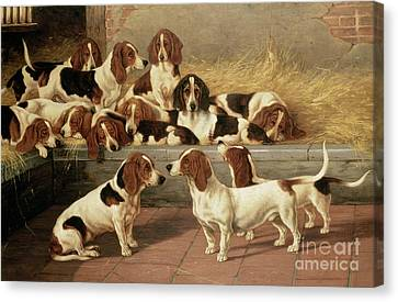 Basset Hounds In A Kennel Canvas Print by VT Garland