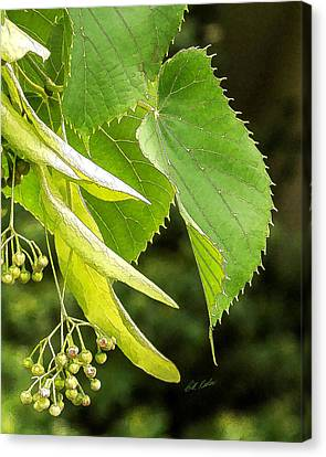 Basswood Berries Canvas Print by Bill Kesler