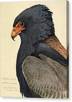 Bateleur Eagle Canvas Print by Louis Agassiz Fuertes