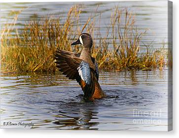 Bathing Blue-winged Teal Canvas Print by Barbara Bowen