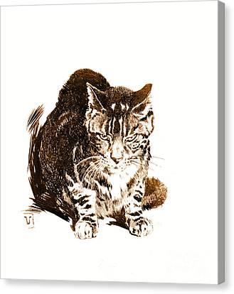 Battleship Cat 1898 Canvas Print by Padre Art