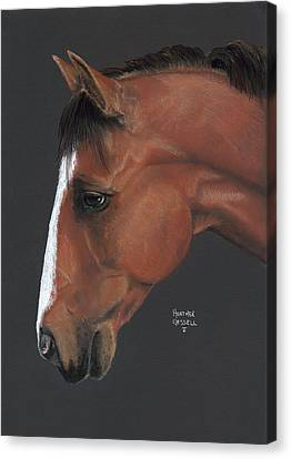 Bay Horse  Canvas Print by Heather Gessell