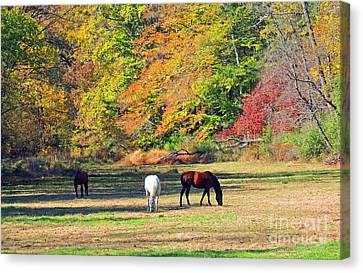 Be Still Canvas Print by Marian DeSalvo-Rodgers