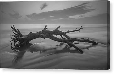 Beach Bones Canvas Print by Debra and Dave Vanderlaan