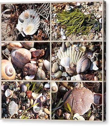 Beach Treasures Canvas Print by Carol Groenen