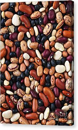 Beans Canvas Print by Elena Elisseeva
