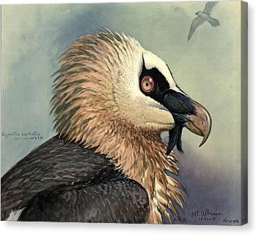 Bearded Vulture Canvas Print by Louis Agassiz Fuertes