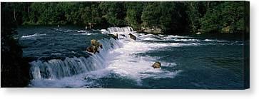 Bears Fish Brooks Fall Katmai Ak Canvas Print by Panoramic Images
