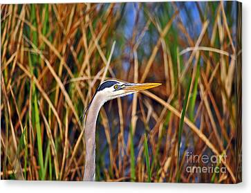 Beautiful Blue Canvas Print by Al Powell Photography USA