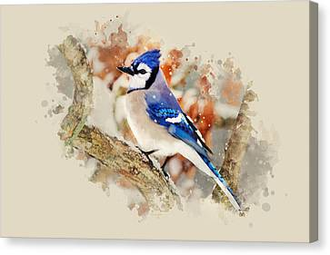 Beautiful Blue Jay - Watercolor Art Canvas Print by Christina Rollo