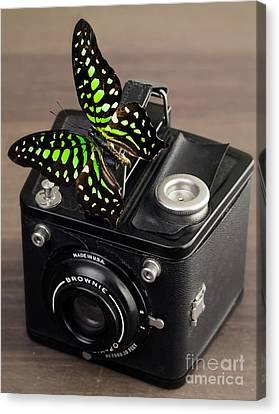 Beautiful Butterfly On A Kodak Brownie Camera Canvas Print by Edward Fielding