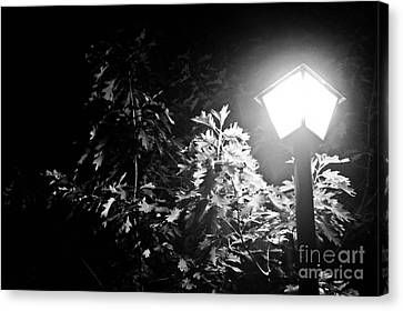 Beautiful Lamp Light In The Dark Canvas Print by Fatemeh Azadbakht