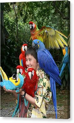 Beautiful Macaw - Garden Of Eden Puohokamoa Valley Maui Hawaii Canvas Print by Sharon Mau