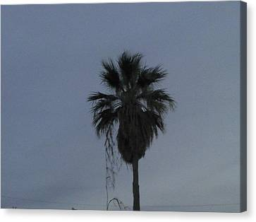 Beautiful Palm Tree Canvas Print by Rebekah Luper