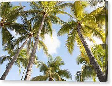 Beautiful Palms Canvas Print by Brandon Tabiolo