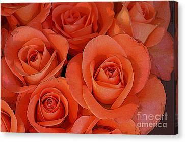 Beautiful Peach Roses 2 Canvas Print by Carol Lynch