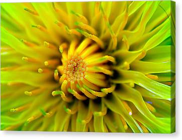 Beautiful Spring Flowers Canvas Print by Toppart Sweden
