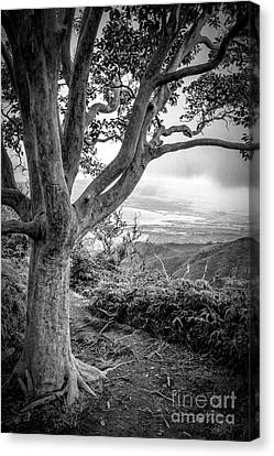 Beautiful Tree Looking Down On A Tropical Valley Canvas Print by Edward Fielding