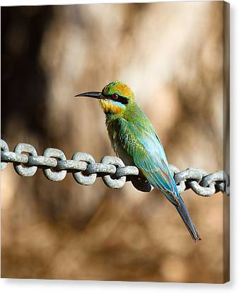 Beauty On Chains Canvas Print by Mr Bennett Kent