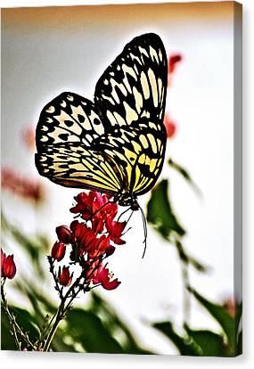 Beauty Wing Canvas Print by Marty Koch