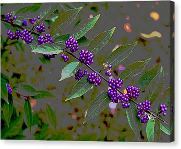 Beautyberry Canvas Print by Frank Tozier