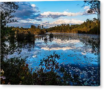 Beaver Pond - Pine Lands Nj Canvas Print by Louis Dallara