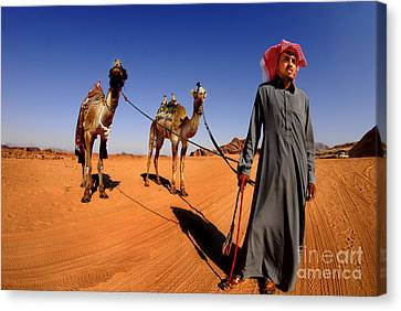 Bedouin And Camels Canvas Print by Dan Yeger