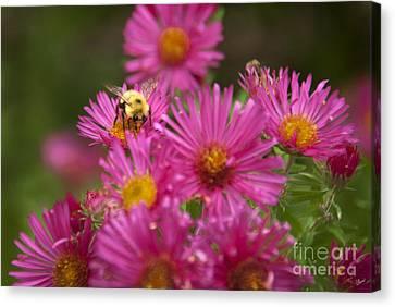 Bee Canvas Print by Alana Ranney