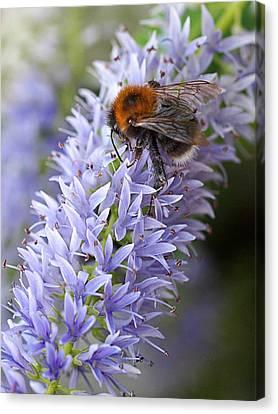 Bee Happy 2 Canvas Print by Gill Billington