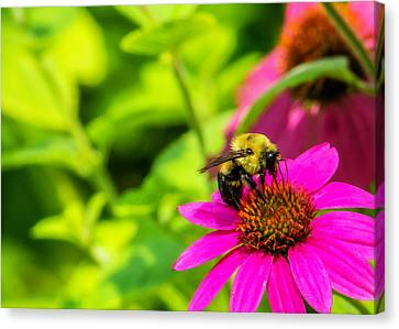 Bee Happy Canvas Print by Jon Woodhams