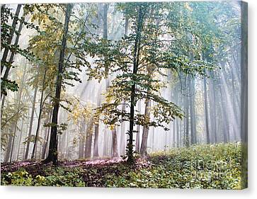 Beech Forest In Fog  Canvas Print by Odon Czintos