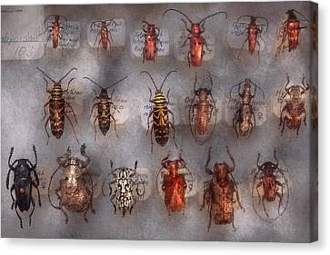 Beetles - The Usual Suspects  Canvas Print by Mike Savad