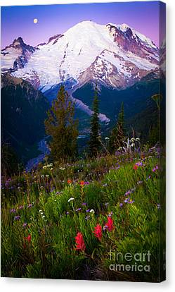 Before Dawn At Mount Rainier Canvas Print by Inge Johnsson