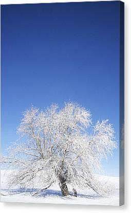 Before The Thaw Canvas Print by Latah Trail Foundation