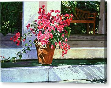 Bel-air Bougainvillea Pot Canvas Print by David Lloyd Glover