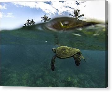 Below The Surface Canvas Print by Brad Scott