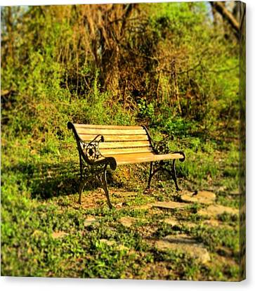 Bench At The Pond  Canvas Print by Andrew Martin