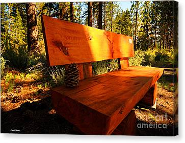 Bench In The Woods Canvas Print by Cheryl Young